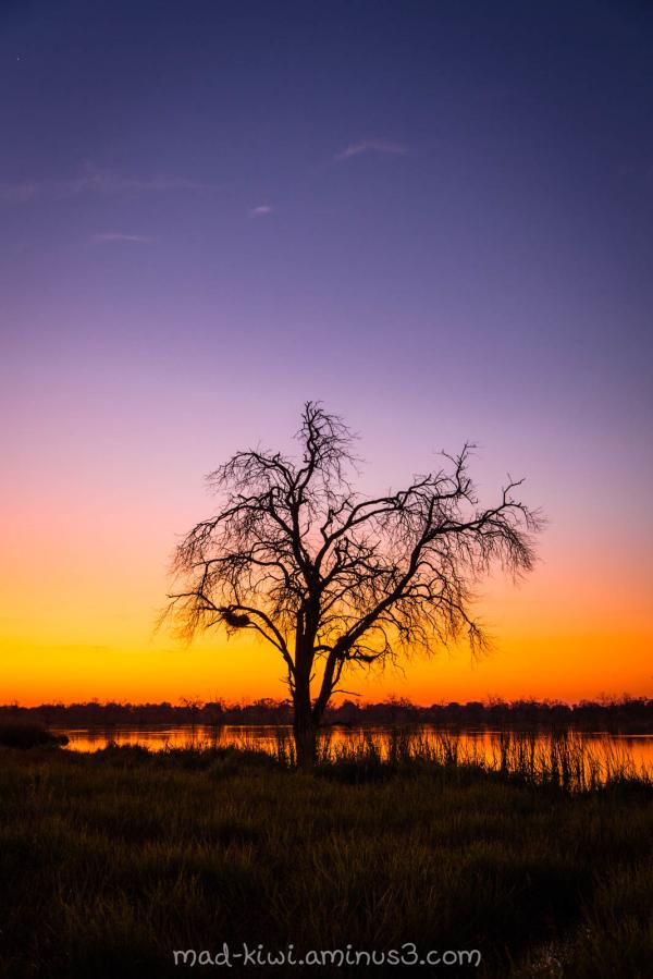 Khwai Sunset IV