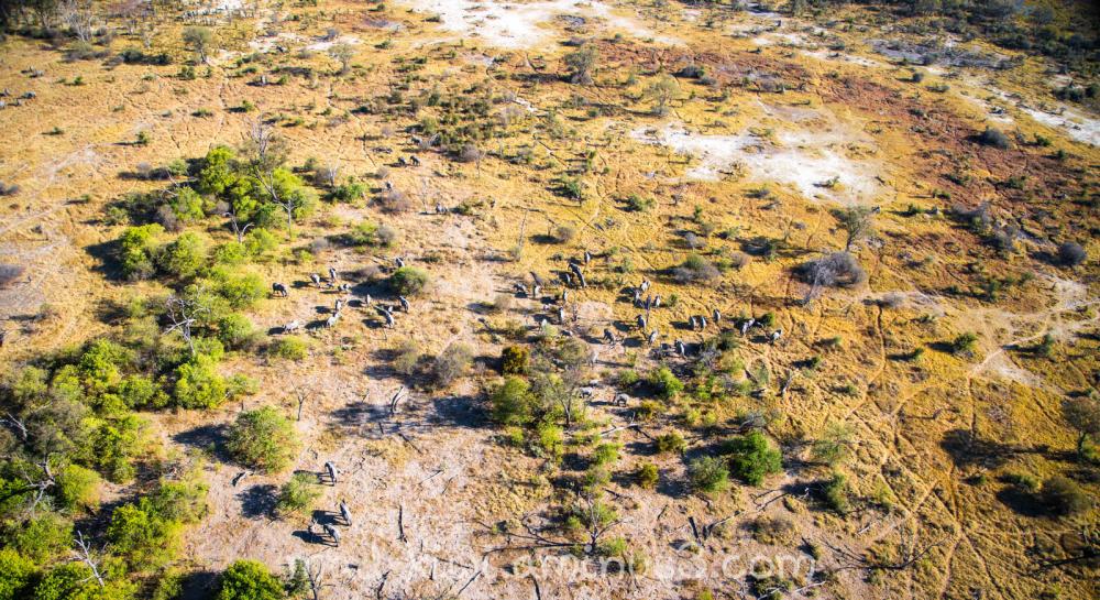 Botswana Helicopter III