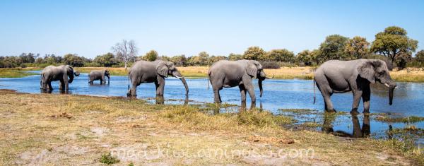 Elephants XIV