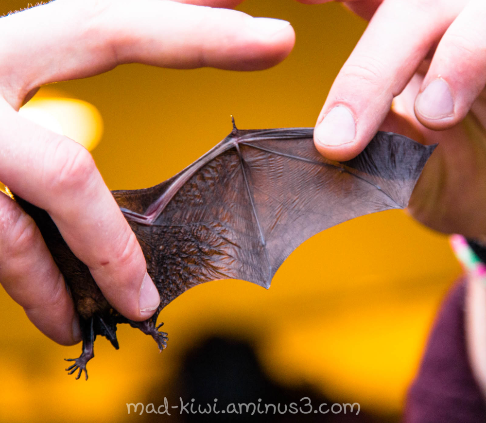 Bat Wing II