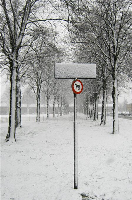 No Snowdogs