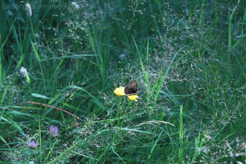 little brown butterfly in mountain landscape