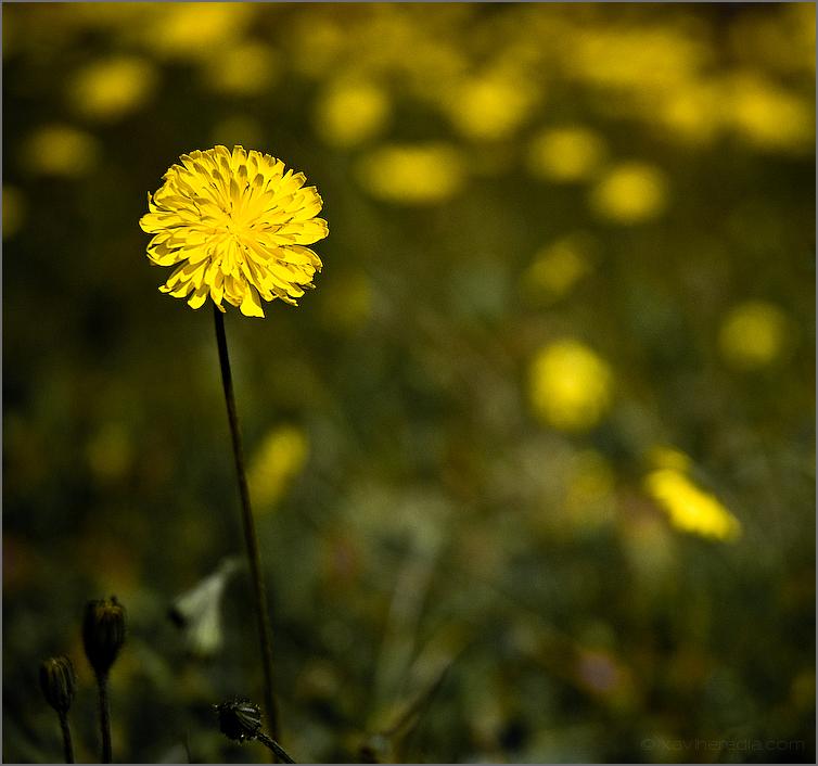 Primavera // Springtime