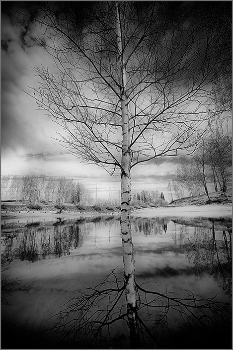 Birch in the middle of the water
