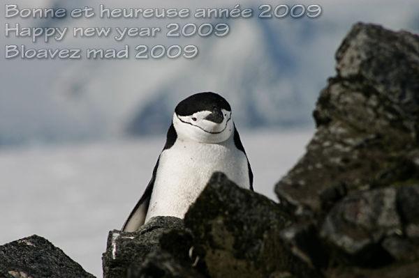 7 novembre 2005 à Half Moon Island