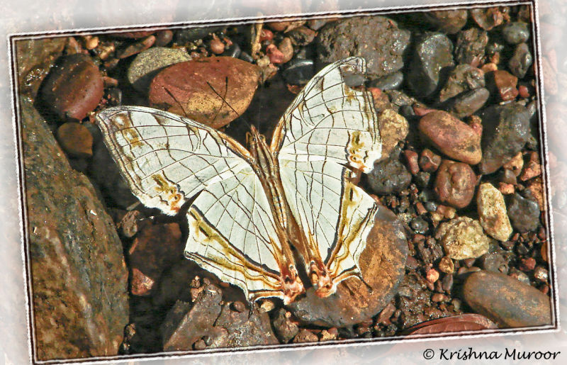 butterfly on stone