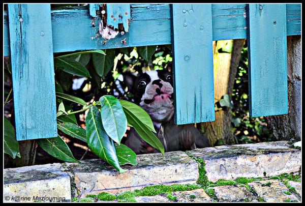 Haute couture canine : la combinaison zippée