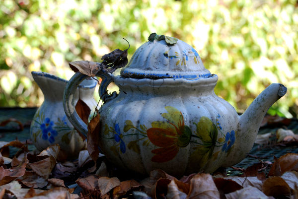 forgotten tea pot