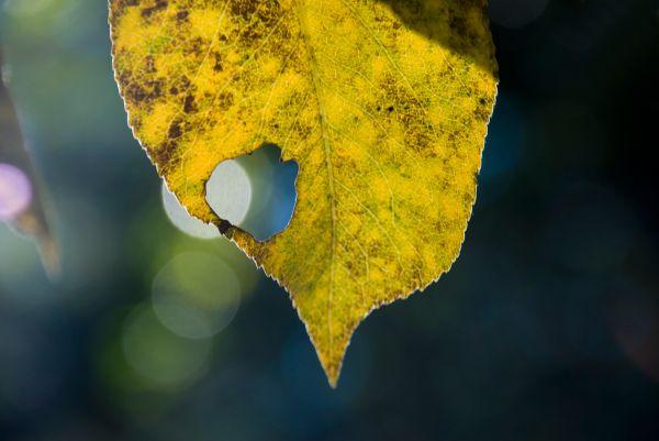 gold leaf bokeh