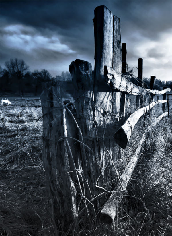 un essai de traitement  : barrière à vaches..