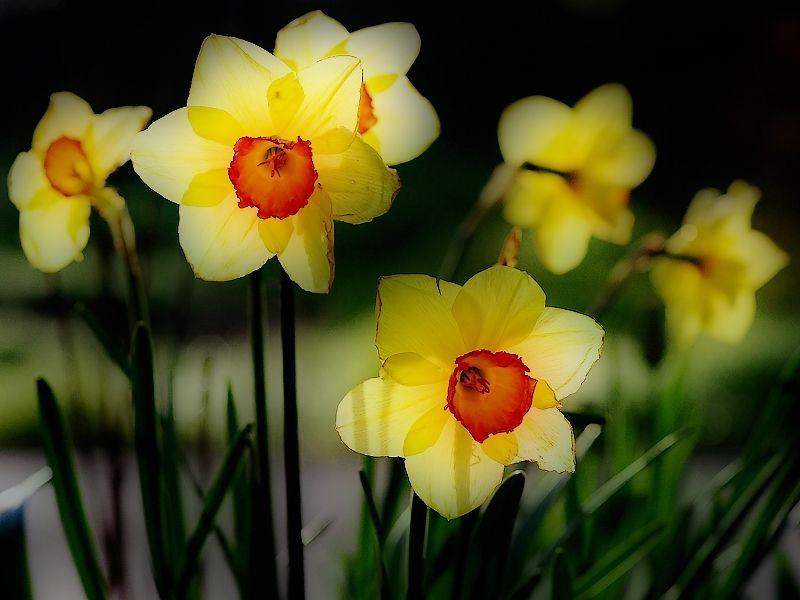 Orton flowers