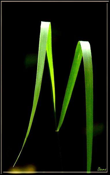 deux brins d'herbe pour un mot.