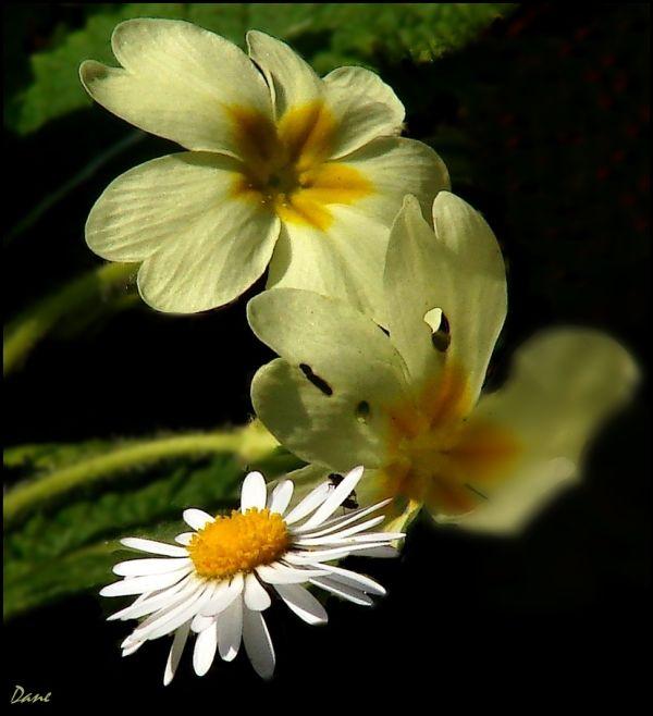 Un bouquet de printemps