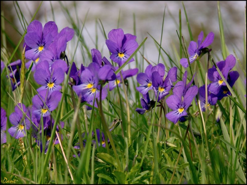 au ras du sol... entre les herbes de la prairie..