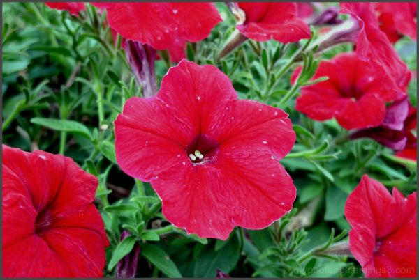 red color petal flower otaru LEICA