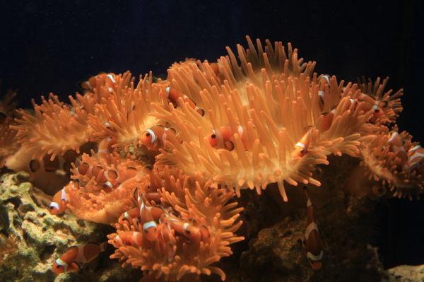 Nemo Acquario di Genova