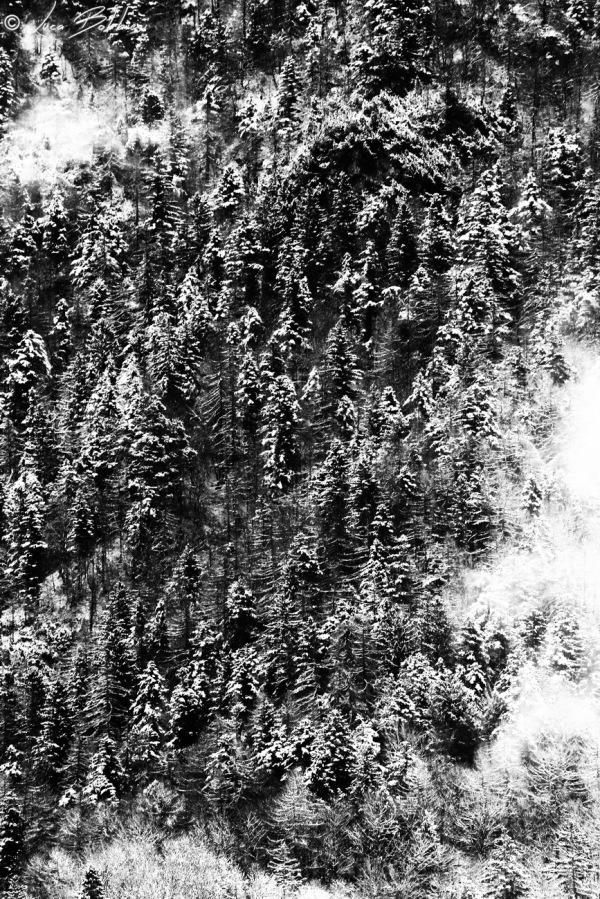 Black & White Trees