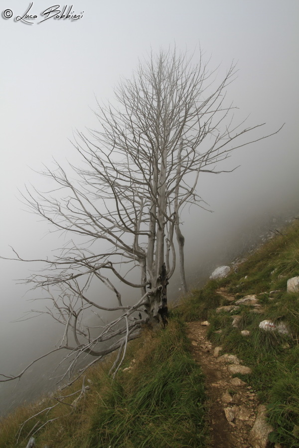 Naked Tree in the Fog