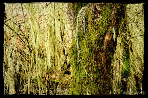 Moss&Tree