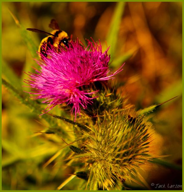 Bee&Blossom