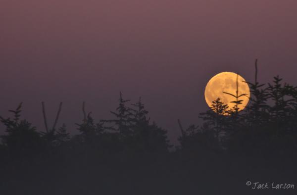MoonRising