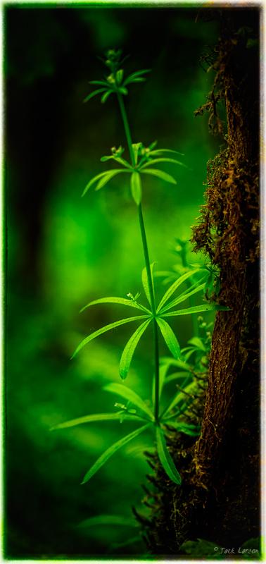 ForestElegance