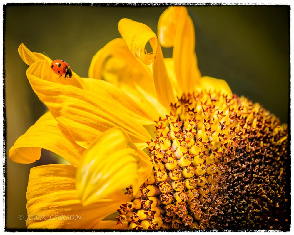 Ladybug Exploring
