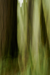 Old Growth Impressionism #3