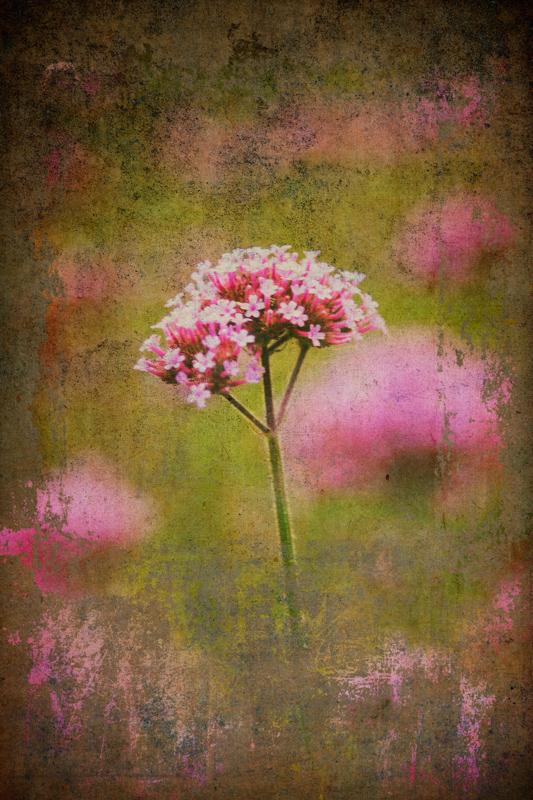 Blend Kit Pink