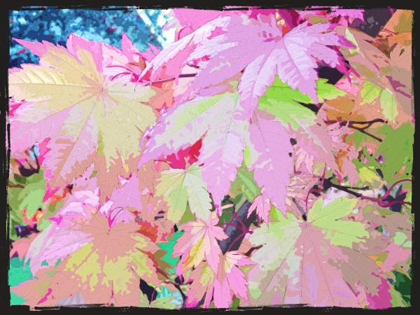 Fall Gathering