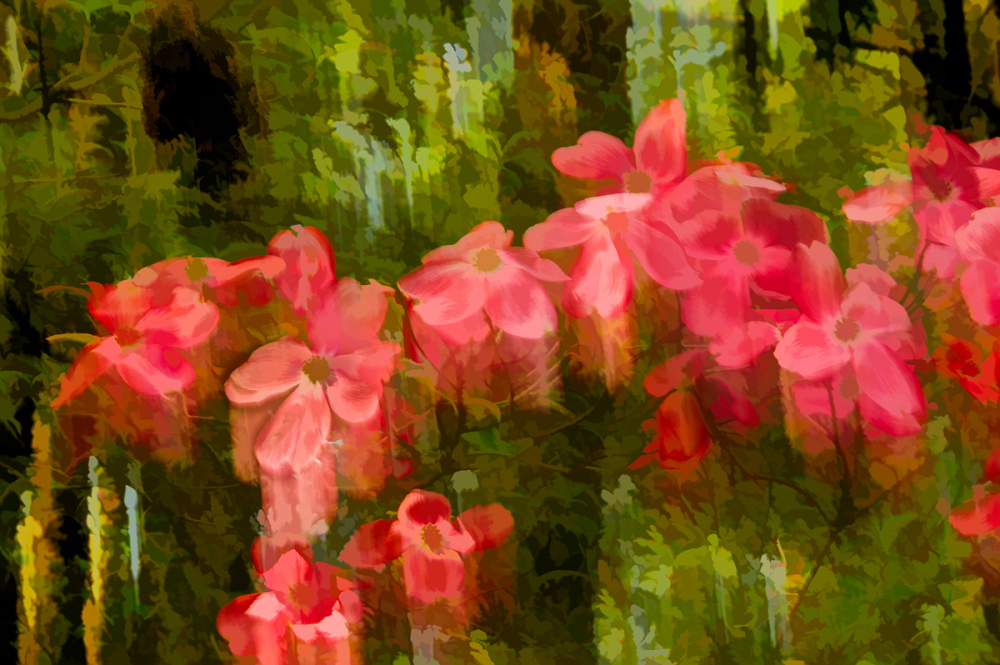 Spring Flowers #9
