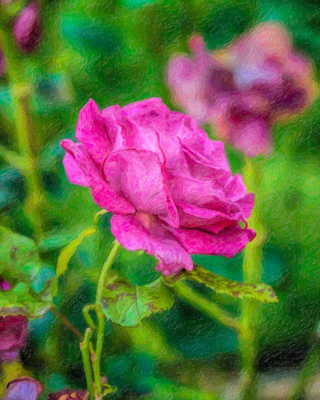 Impressionistic Rose