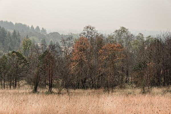 Foggy Early Fall