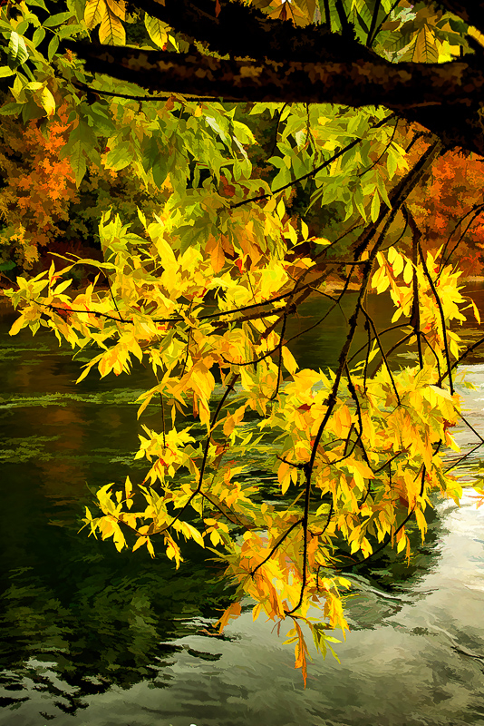 Autumn Leaves Along the Willamette 2