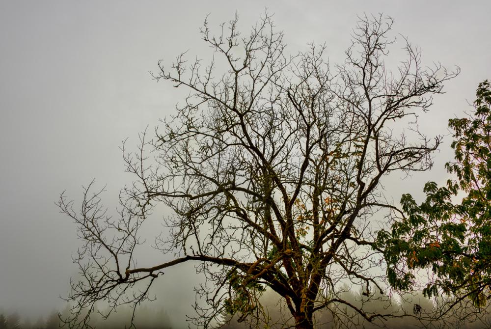 Fog Shot Medley