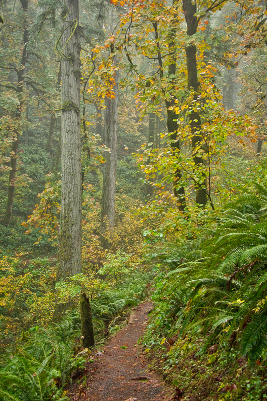 Autumn in the Old Growth Forest #7