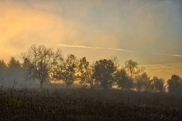Early Morning Ground Fog