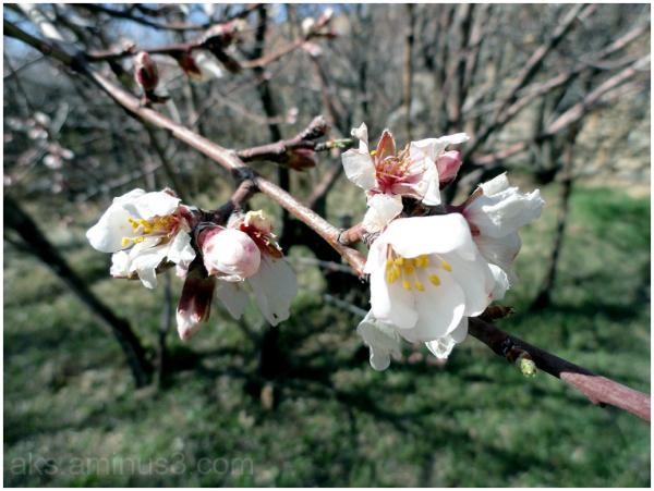 Springtime 4