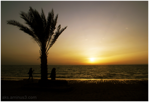 Alone palm