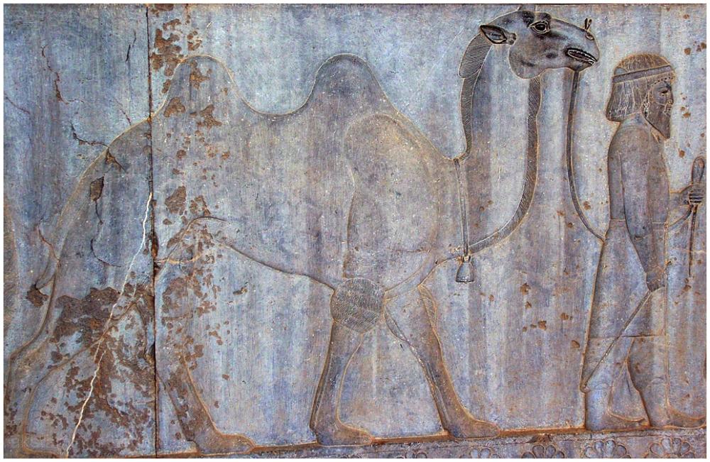 Persepolis 6