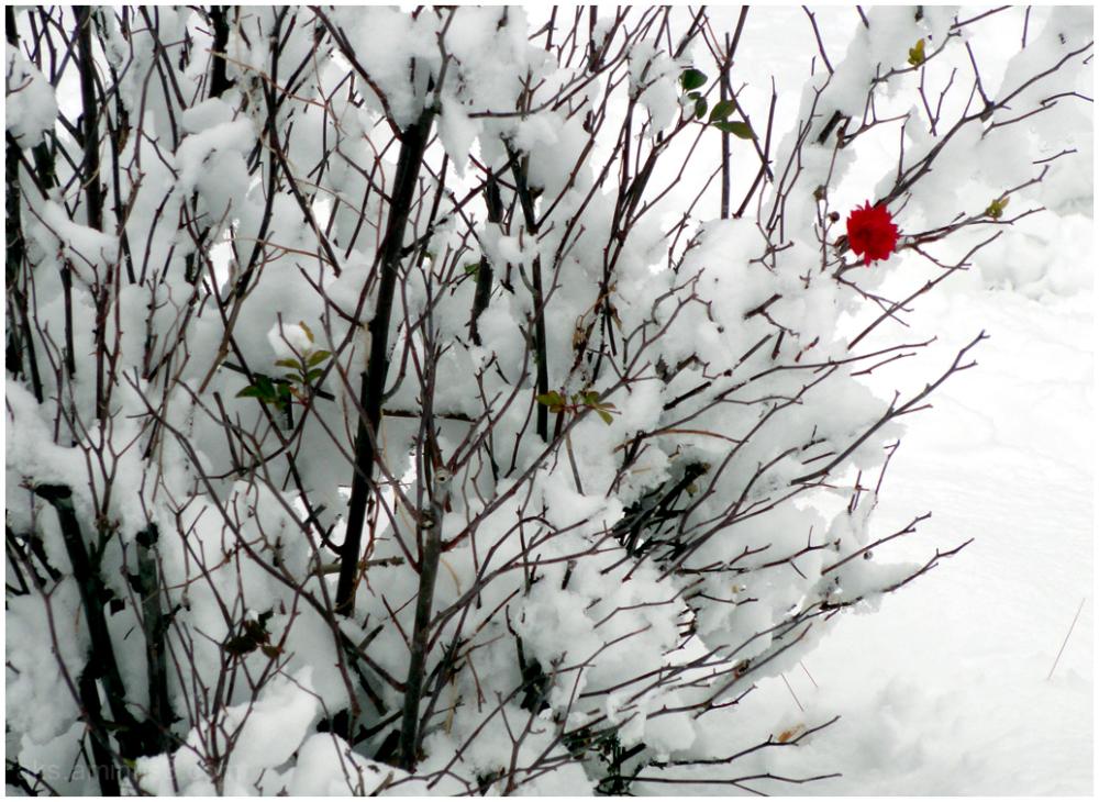 A snowy day 2