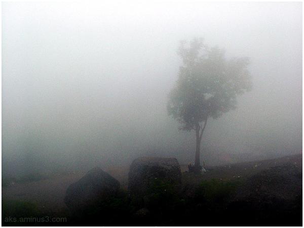 Picnic in the fog