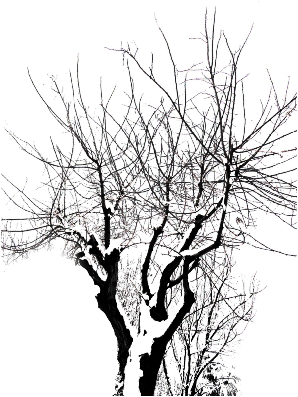 Winter with trees