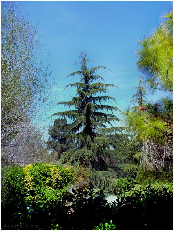 Eram garden