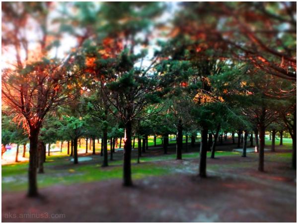 Gradually Autumn