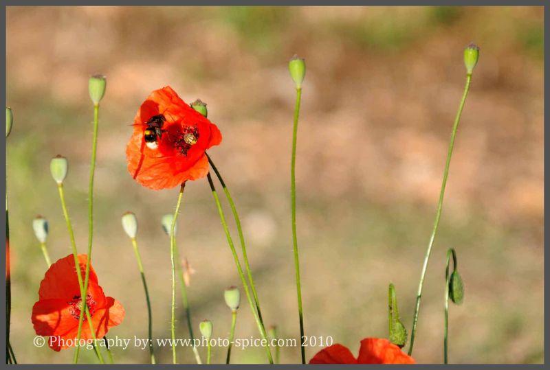 www.photo-spice.com