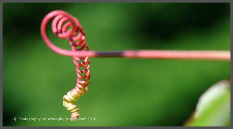 Twisty-Twirly thing