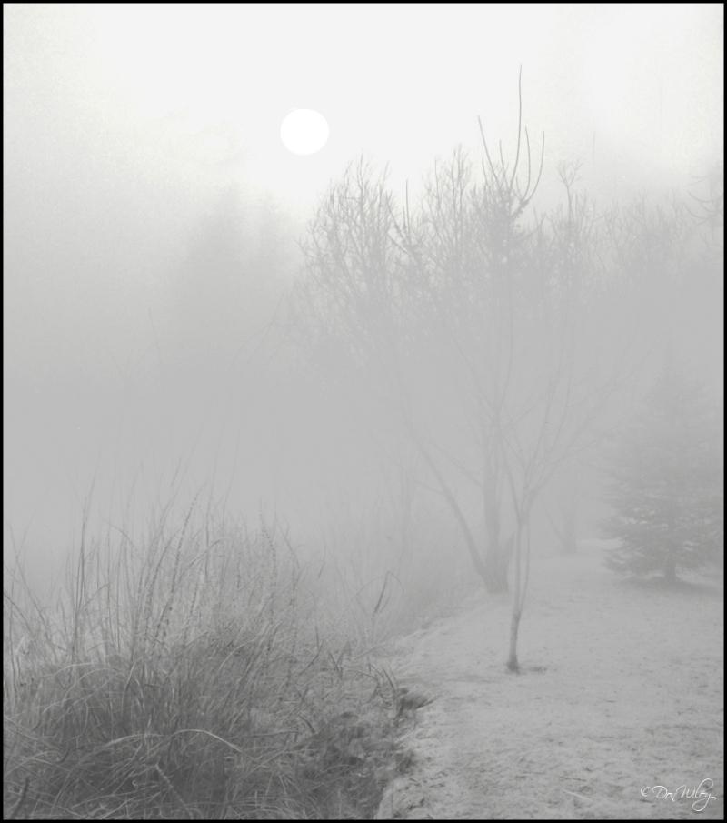 A quiet vision