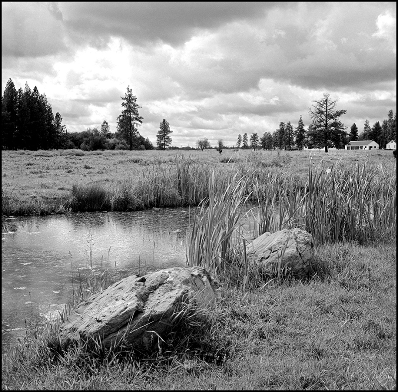 Wetlands on the Game Preserve