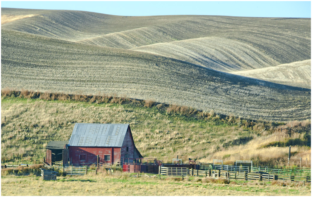 Tiny Palouse Barn